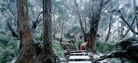 鐵杉林自然步道